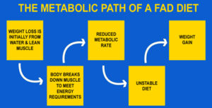 The Metabolic Path of a fad diet